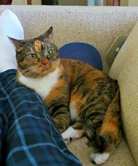 Gracie 22 June 2016 9766Ri 5x6 (edgarandron - Busy!) Tags: cats cute cat gracie feline tabby kitty kitties tabbies patchedtabby