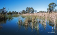 Warren Wetland_0094 (Manni750) Tags: blue sky water birds wildlife warren wetland