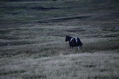 197_Eshaness (monika & manfred) Tags: nature scotland rocks wind hike mm surroundings shetlands eshaness shetlandislands shetlandisles drinkinghorse holidays3