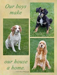 Our Boys (Denise Trocio (D Trocio Photography)) Tags: dog pet pets boys backyard buddy sammy luckycharm petphotography domesticanimal dtrociophotography