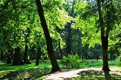Summer in the park :) (green_lover) Tags: park yrardw poland trees paath walking nature green
