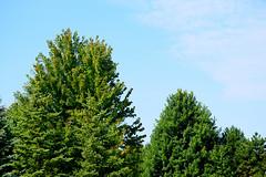Michigan Deciduous Trees (jonathanli12) Tags: bridge lake sports nature grass sign basketball pine landscape pond michigan logs peaceful greenery serene shrubs hdr