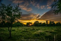 sunset (fotos_by_toddi) Tags: sunset sky sun rot clouds sonnenuntergang outdoor sony pflanze feld wiesen wolken nrw gras alpha drama landschaft sonne a7 westfalen niederrhein nordrhein voerde fotosbytoddi