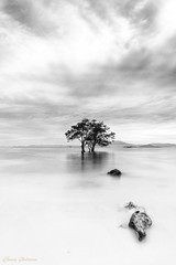 Single tRee (Tommy Indrawan Photography) Tags: longexposure blackandwhite bw tree sony fineart bnw sonya7 fe28mm hnyfilter