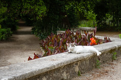 Kitty (Sally Dunford) Tags: kitty montpellier canon1755mm jardindesplantesdemontpellier catsontheinternet canon7d sallyfrance2016 sallyjune2016