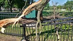 Tree Limb Down in Fuller Park #6 (artistmac) Tags: park street chicago tree fence illinois outdoor wroughtiron il repair fallen southside bent limb fuller fullerpark michaelbrown superintendent workorder blowndown hispark lethimactlikeitforachange