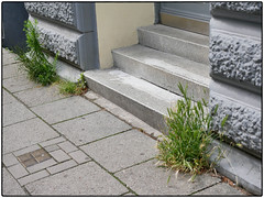 Wheat Of The City III (/Reality Scanner/) Tags: urban green steps stair wheat weed weizen grn city stadt germany hamburg deutschland guesswherehamburg grey grau stein stone beton concrete