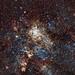 The Tarantula Nebula (30 Doradus)