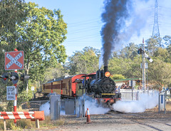PB15 class number 448, smoke and steam leaving Swanbank Station Ipswich (Photos by Lance) Tags: railfans geotagged steamtrain train steamengine loco steamlocomotive passengertrain swanbankrailwaystation ipswichqueensland photo urban country trees signs tracks railroad outdoor locomotive heritagetrain railwaystation railcrossing lights trafficcontrol smokeandsteam steam smoke coal coalfired locomotivesmoke july2016 clerestorycoachaustralianstock queensland puffing