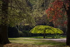 clingendael-7818 (Arie van Tilborg) Tags: japanesegarden hague thehague clingendael japansetuin clingendaelestate landgoedclingendael arievantilborg