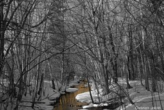 Forest With The Golden Stream (ChristianJakob_) Tags: trees winter blackandwhite white snow black reflection fall nature water horizontal digital forest river season landscape outdoors gold landscapes saturated bush woods stream cloudy availablelight nobody silence environment idyllic scenics beautyinnature nonurbanscene