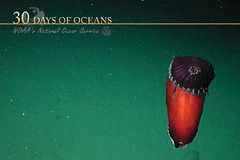 How deep is the ocean? (NOAA's National Ocean Service) Tags: ocean noaa nos spanishdancer howdeepistheocean nationaloceanservice oceanexploration oceandepth