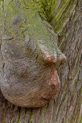 Exorbits (Corinne Queme) Tags: paris france tree eyes head yeux boisdevincennes arbre tte protuding exorbits