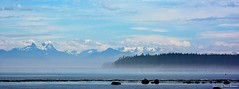 Morning mist (Paul Getman) Tags: mist fog britishcolumbia vancouverisland malcolmisland queencharlottestrait