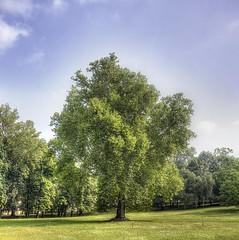 A big Tree (micheletorretta) Tags: italy parco torino nikon italia piemonte turin hdr cavour santena d7000