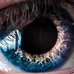 198/365/2013 - Voigt-Kampff (TimGarlick) Tags: blue iris macro eye 365 pupil