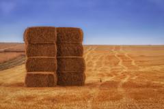 Hay Stacks (Rutger Blom) Tags: blue sky lund field yellow countryside europe sweden tracks fav20 farmland haystacks sverige agriculture scandinavia zweden 200mm fav10 ef70200mmf4lusm canoneos5dmarkii