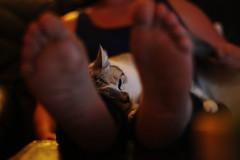 IMG_5721 (Eliisabethhh) Tags: cute night cat evening nice kitten sleepy katze lovely sleeps auf liebe sweety miau schlft mietze mutters beinen