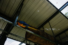(ddsnet) Tags: bird birds zoo sony hsinchu taiwan 99  slt      sinpu hsinpu bird zoo zoobird    singlelenstranslucent 99v