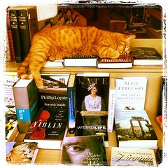 store cat #books #store #aardvark #church #cat #ilovesf #pet #sfist #instagram #lynnfriedman @lynnrfriedman #webstagram #webstapick  #寿司壽司 #kitty #pet #animal #neko #gato #kat #貓 #meow #猫寵物 #kitten #kočka #kissa #γάτα #बिल्ली #katt #kotpisică #cat #kitten (Lynn Friedman) Tags: sanfrancisco california usa pet cute church animal cat square relax store kitten kat feline chat nap adorable kitty fluffy books gato squareformat meow rest neko aardvark mellow kočka overload 貓 katt sfist kissa chaton lordkelvin ilovesf γάτα lynnfriedman बिल्ली iphoneography instagram instagramapp uploaded:by=instagram 寿司壽司 猫寵物 kotpisică webstagram foursquare:venue=4a467a5df964a520eca81fe3 webstapick lynnrfriedman