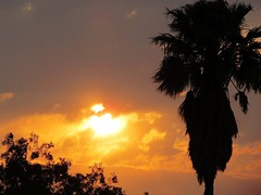 Beautiful Sunset (Cathlon) Tags: sunset sky orange silhouette clouds purple palmtree