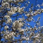Schwalingen - Frühling thumbnail