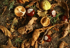 Goldener Oktober / golden October (HEN-Magonza) Tags: autumn herbst chestnuts kastanien