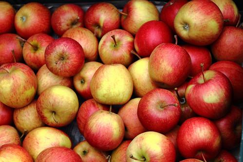 Äpfel / apples / les pommes