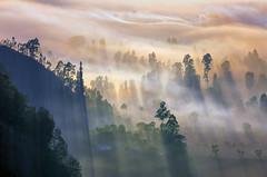 Negeri Di Atas Awan (eggysayoga) Tags: morning light shadow bali sun misty fog sunrise indonesia golden nikon day ray sigma os mount f28 rol bukit rayoflight 70200mm kintamani pinggan d7000