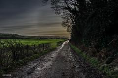 Pathway to Heaven!! (BGDL) Tags: landscape scotland countryside ayrshire odc auchincruive nikkor18105mm13556g nikond7000 coldbutnice bgdl lightroom5