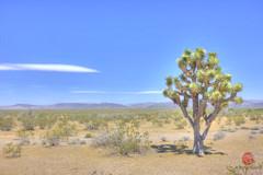 Mojave, AZ (Mark Kaletka) Tags: arizona southwest desert joshuatree mojave hdr highdynamicrange mojavedesert