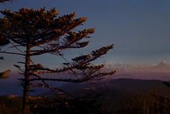 Sunrise,Sandakphu, Darjeeling, West bengal, India (Sougata2013) Tags: morning trees light india mountain snow nature sunrise hill himalaya darjeeling hilltop westbengal morningview sandakphu snowpeak himalayanrange pandim kanchanjangha kanchenjungarange mountpandim