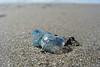 Bluebottle jellyfish (Home Land & Sea) Tags: sea newzealand summer macro beach jellyfish nz wellington pointshoot sonycybershot bluebottle kapiticoast waikanae portugesemanowar physaliaphysalis explored dsch3 homelandsea