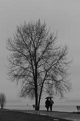 Raindrops (Dex Horton Photography) Tags: canada tree rain fog vancouver umbrella bc britishcolumbia couplelove