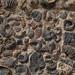 Fósseis de milhões de anos