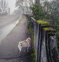 Crossing (Ryan Kimball) Tags: bridge fog pug cottagegrove