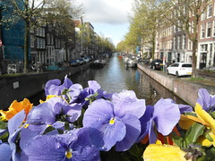Flowers in Amsterdam 2. (Flyingpast) Tags: city travel flowers blue vacation holiday plant holland nature netherlands amsterdam canal spring europe pretty sunny prinsengracht citybreak wb2000 tl350
