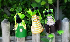 Wochenende in Sicht [Explored May 27, 2016] (G_E_R_D) Tags: green fence weekend frogs grün zaun wochenende frösche hff