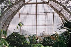 Palm House (RoYaLHigHnEsS1) Tags: park kewgardens plant color canonav1 green london film leaves richmond palm iso greenhouse 200 agfa