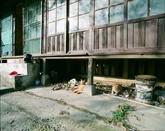 () Tags: life pet 120 film analog cat mediumformat pentax taiwan 120film medium format analogue filmcamera 6x7 67 67ii  filmphotography pentax6x7 pentax67   filmphoto pentax67ii pentaxcamera 500px  filmphotograph pentaxflickraward