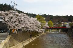 / Hida Takayama (kimtetsu) Tags: bridge japan spring jp  cherryblossom  takayama  gifu