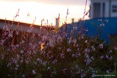20150525.19.43-702-shannonkay.jpg (shannonkayphoto) Tags: beach sidney coronadelmar seniorportrait littlecorona