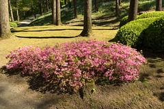 160504_IMGP4504_w (Jacq-R) Tags: construction concret maulvrier parcoriental jardinparcdcoratif
