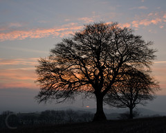 Last glimpse of the sun, Devon UK (petehem) Tags: trees sunset downs devon yarde hemington bradninch