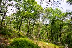 Slope (kzoop) Tags: park trees newyork tree nature outdoor hiking hike bearmountain manual 12mm bearmountainstatepark samyang majorwelchtrail majorwelch