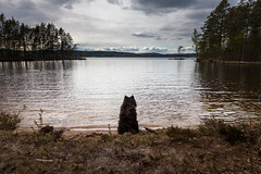 (Svein Nordrum) Tags: sky dog beach nature water norway clouds outdoors still woods scenery sitting quiet looking explore wilderness explored