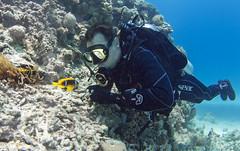 The big guest (KnyazevDA) Tags: travel sea redsea wheelchair egypt scuba diving disabled diver padi undersea handicapped paraplegic disability aowd owd paraplegia