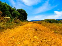 Karmiel, Israel (zingeramit263) Tags: blue sun green nature yellow canon israel outdoor karmiel sx710hs
