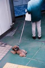95030016 (Matsuki Narishige) Tags: leica film japan 50mm tokyo kodak summicron f2 50 portra m6