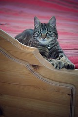 Meme (Mirrorlessview) Tags: macro cat t olympus 60mm f28 omd omdem5ii olympusomdem5mkii